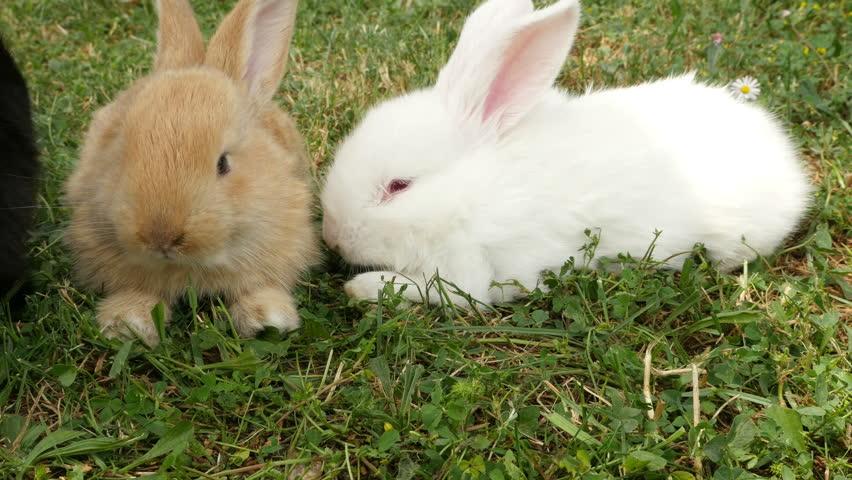 bunny rabbit sniffing around - photo #25