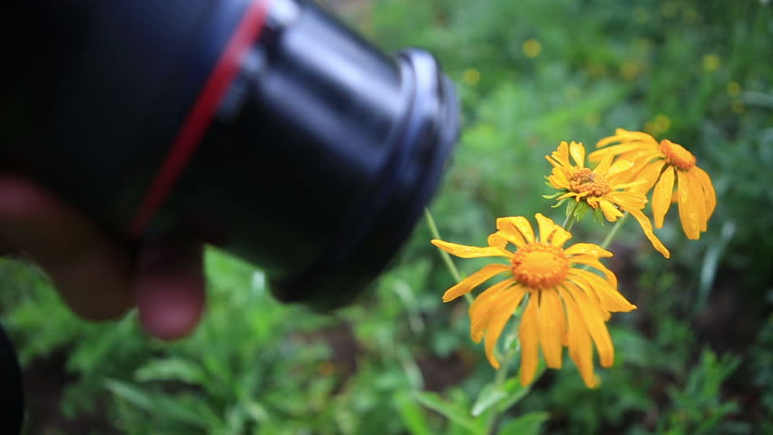 Nature photographer taking pictures of wild flower - HD stock footage clip
