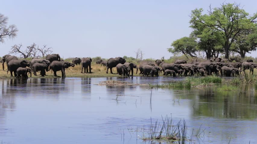 herd of African elephants drinking from river in small Nambwa game reserve, Namibia