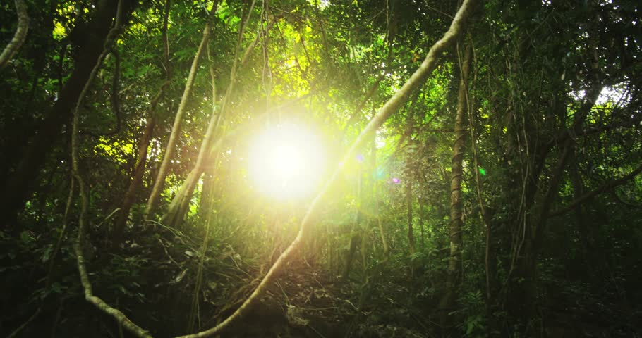 Sun rays light shines through trees and branches of jungle forest canopy. Beautiful background of exotic tropical flora and green vegetation in rainforest