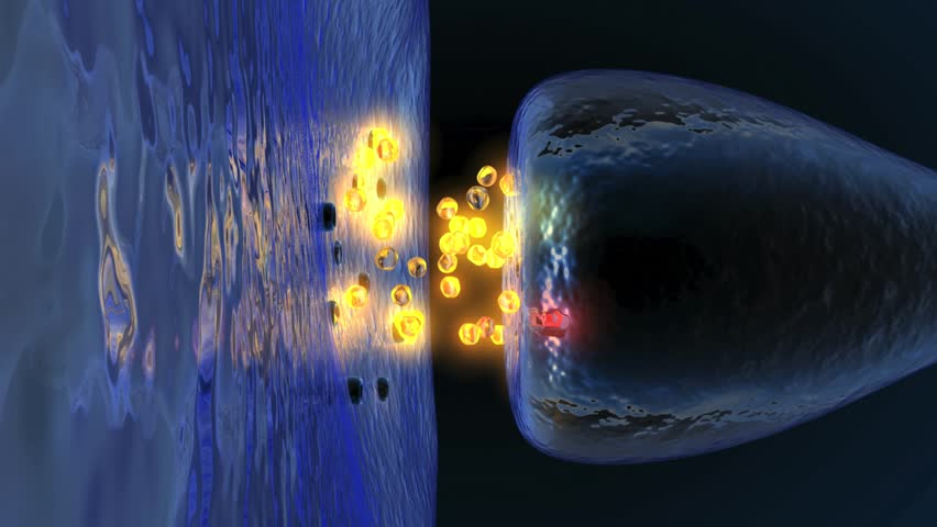 Neurotransmission in the Synapse - HD stock video clip