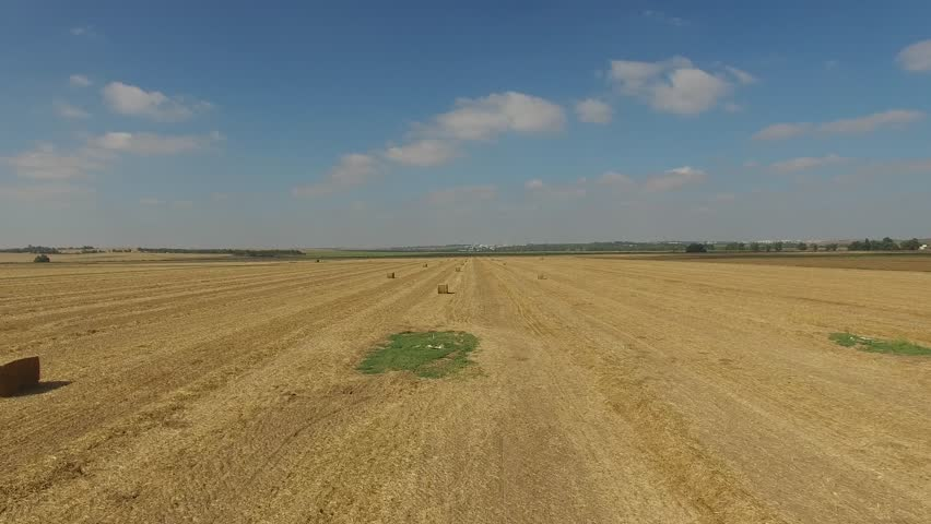 AERIAL 4K: Flight over the wheat field after harvesting.