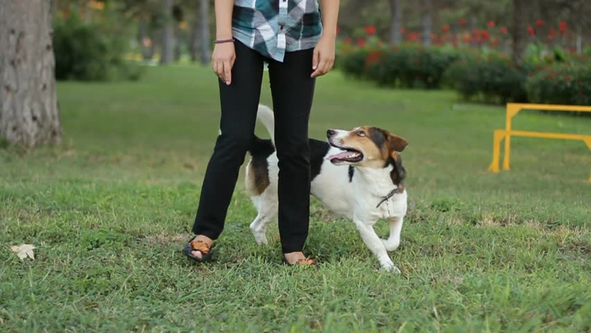 SLOW MOTION. Girl, the teenager trains a dog of breed jack russell terrier on a green glade - HD stock video clip