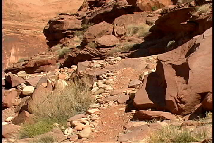 Woman mountain biking - SD stock footage clip