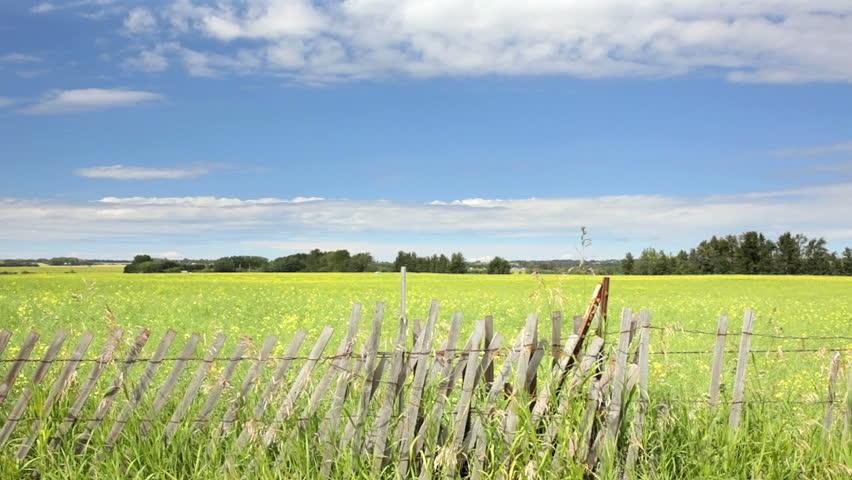 Scenic field of grasses - HD stock footage clip