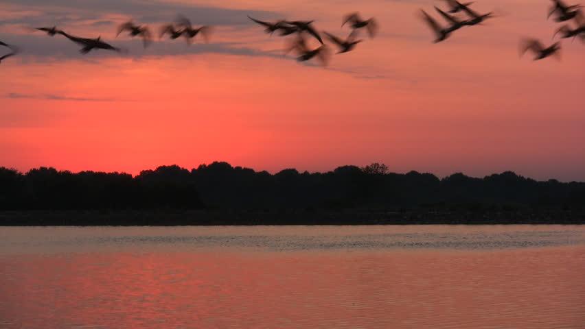 Lake Sunrise. Birds Fly off of Water Towards Camera.
