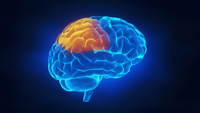 Human brain parts - HD stock video clip