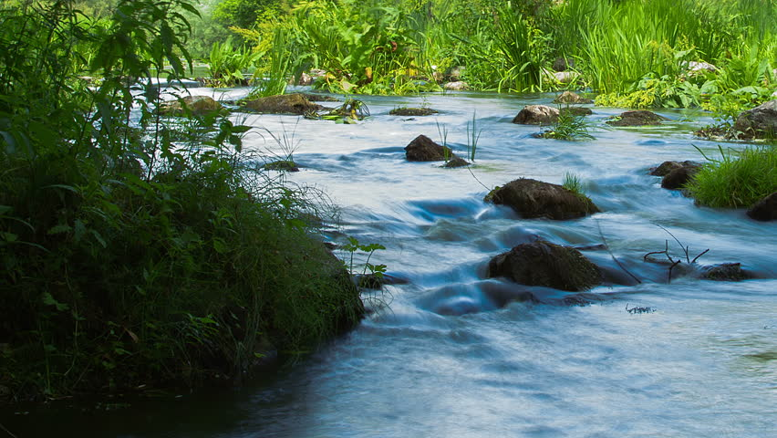 forest stream time lapse, Stream Water and Green Mossy Rocks, mountain stream time lapse, Moss On The Rocks Forest Stream, Forest river, Water runs quickly through the rapids - HD stock video clip