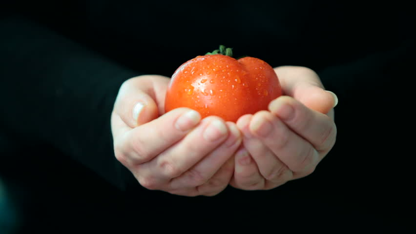Women hands holding red fresh tomato - HD stock video clip