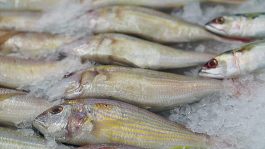Tilapia fish eating stock footage video 5081531 shutterstock for What do tilapia fish eat