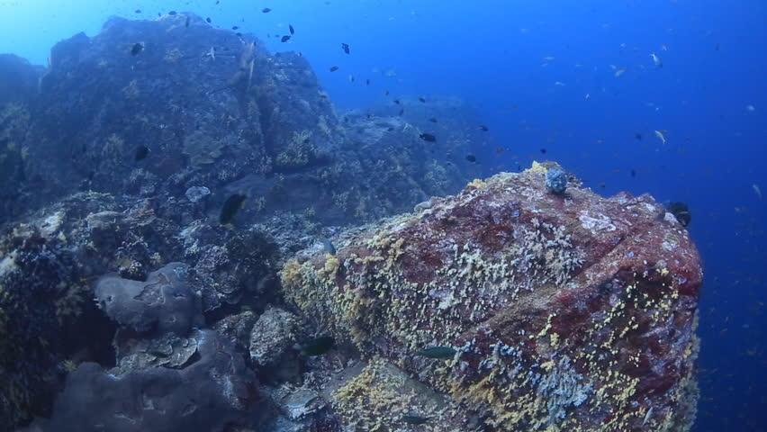 Fly Underwater Underwater Fly Over Deep