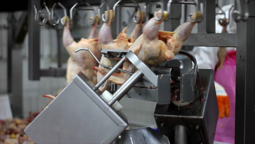 Food processing plant, chicken meat