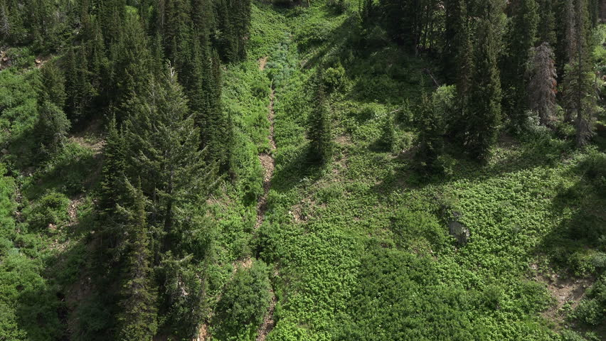 Aerial flight down green mountain forest. Winter and summer resort aerial mountain tram at Snowbird Utah. Passenger tram fly across forest slope of mountain. Wasatch Mountains outside Salt Lake City.