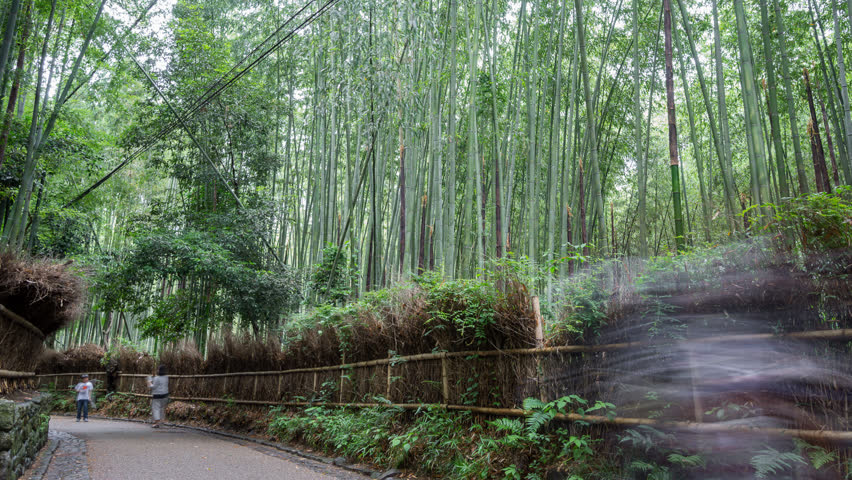 Long exposure Time lapse of tourists in bamboo forest, Arashiyama, Kyoto