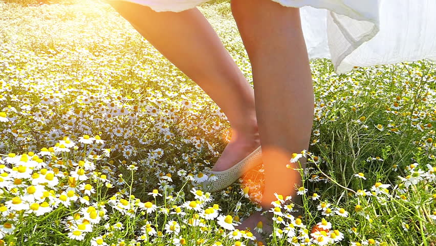 Woman's legs walking through the chamomile daisy flowers field.Unrecognizable person .Lens flare, high speed camera, slow motion.Camera on the move, Steadicam in the hand!