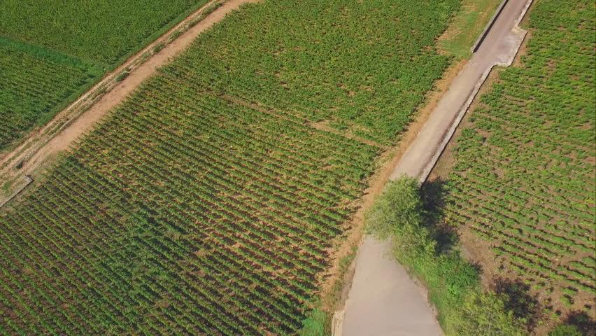 4K Flying over rural landscape - aerial shot of french country side / campagne française vue par un drone
