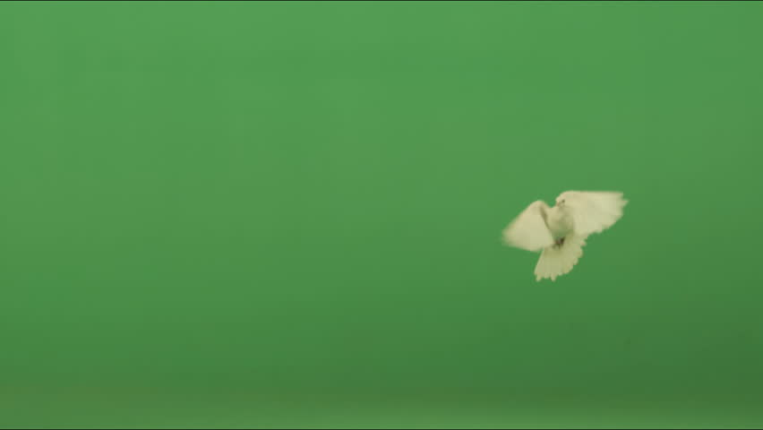 Doves  | Shutterstock HD Video #1216375