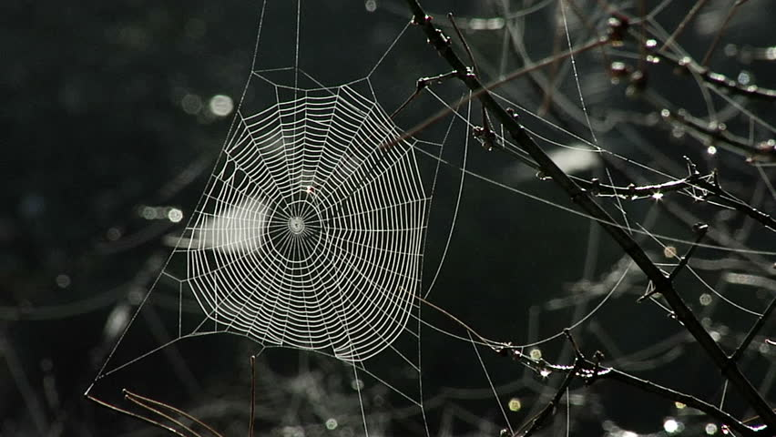 A spider web shot with a panasonic HVX flowing in a light breeze with back lighting.