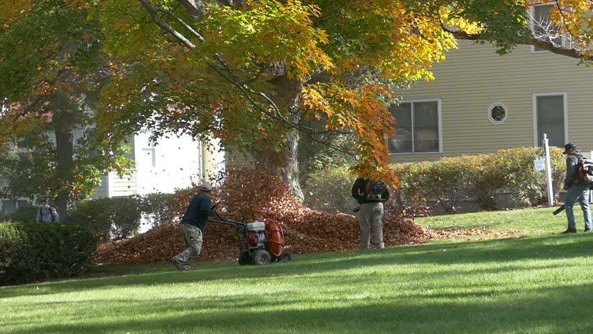 Mans with leaf blowers clean up autumn leaves. - HD stock footage clip