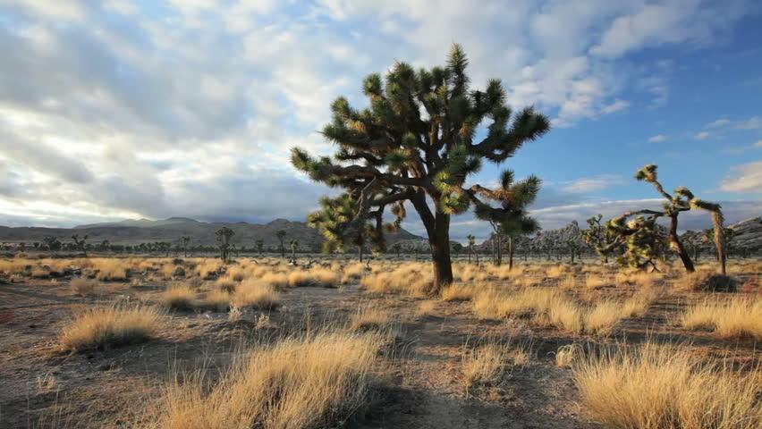 Landscape pan of joshua tree national park stock footage for Landscaping rocks savannah ga