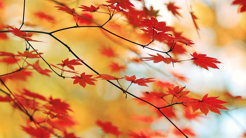 Branch of colorful autumn leaves on the forest background.
