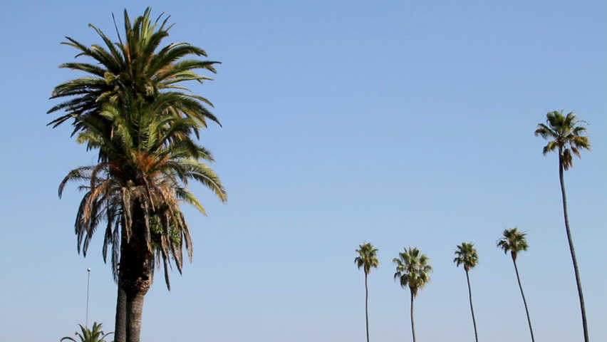 Palm trees against a blue sky | Shutterstock HD Video #1281436
