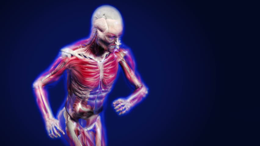 3d dolly shot of an x-ray man running, showing muscles and bones. - HD stock video clip