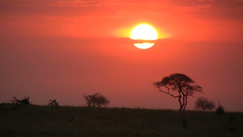 elephants walking in the setting sun 2