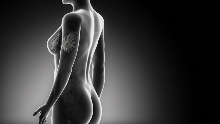 Female BREAST anatomy in black detail  x-ray loop