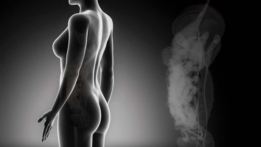 Female GUTS anatomy in black x-ray loop - HD stock video clip