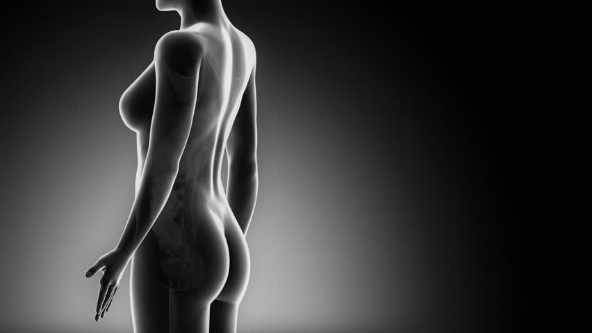 Female BILIARY anatomy details black x-ray loop - HD stock footage clip