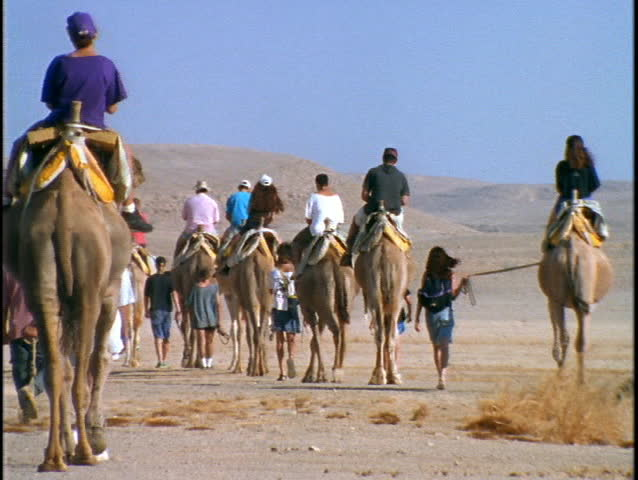 Tourists ride camels through a desert in Israel. - SD stock video clip