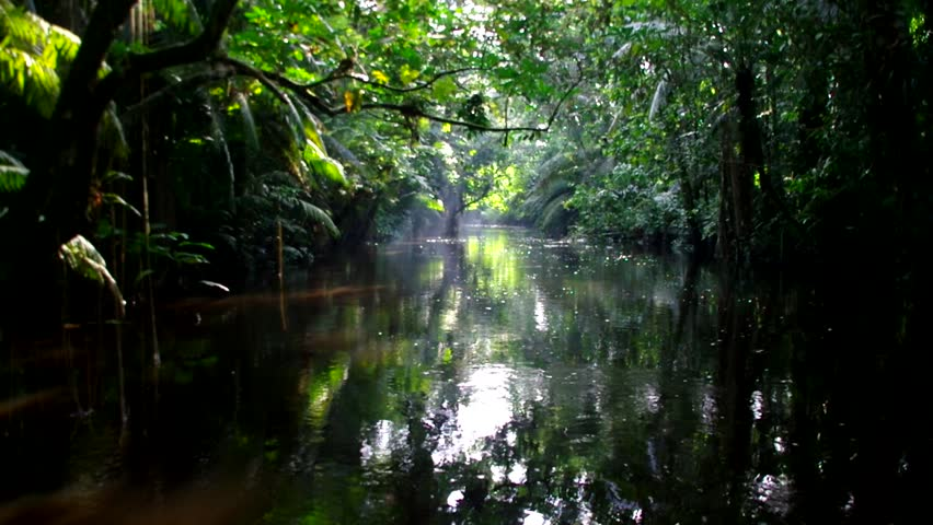 Spectacular front view from small boat going slowly into jungle river habitat.