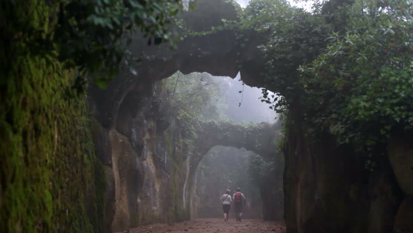 heavy cloudy fog in magical scary creepy forest stock