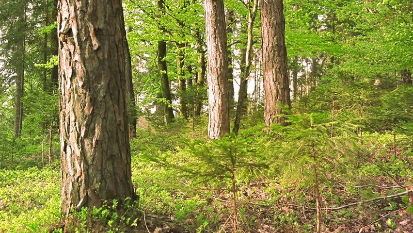 Beautiful windy green color spring season forest tree scene.  - HD stock video clip