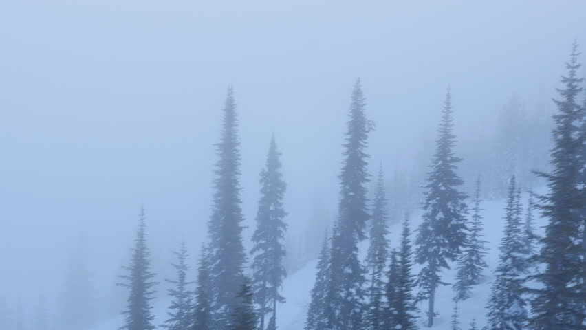 View from gondola going up mountain. Climbing out of the mist. BC, Canada.