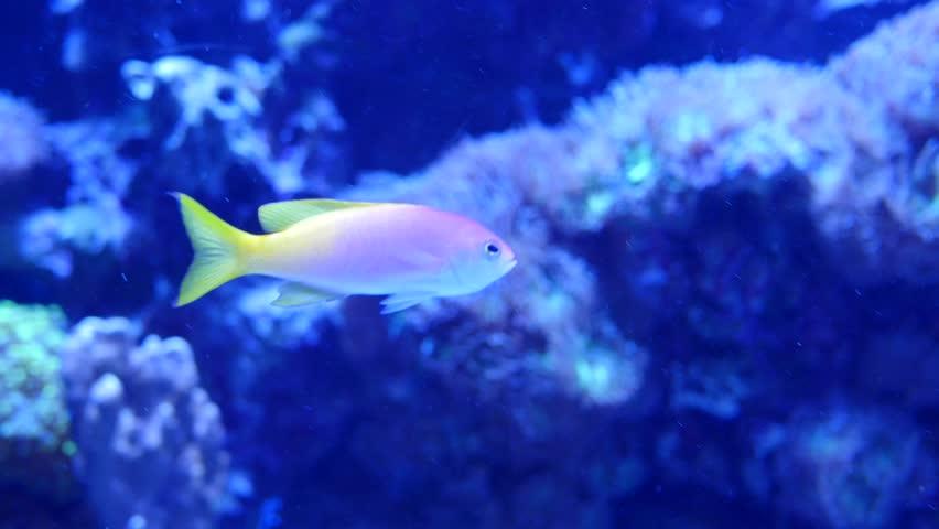 4k hd amazing goldfish - photo #21