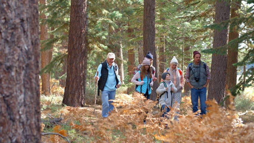 Panning shot of multi generation family walking in a forest | Shutterstock HD Video #14757685