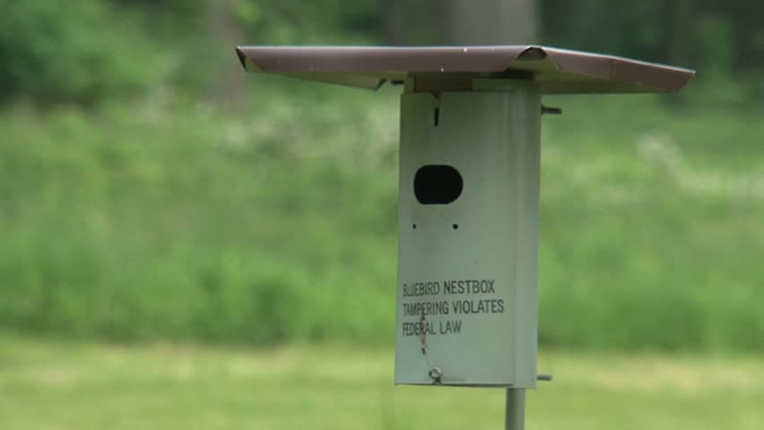 Bird and a birdhouse. - HD stock footage clip