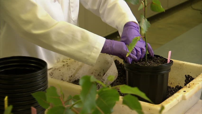 2008:A botanist places an identifying marker in a pot with a sapling.
