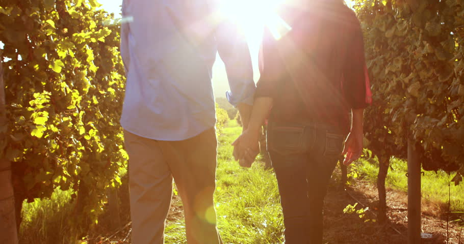 Rear view of a couple walking hand in hand between grapevine - 4K stock footage clip