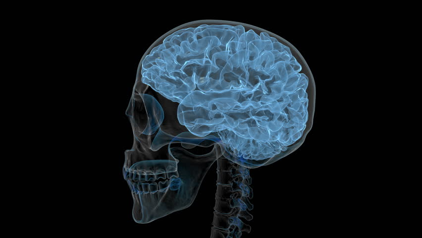 Animated human brain - photo#44