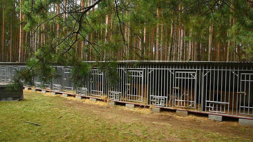 Shelter for dogs in the woods_27   Shutterstock HD Video #15320446