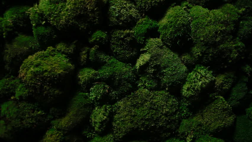 Dark green moss grows on the stones | Shutterstock HD Video #15435223