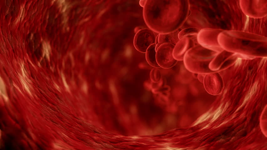 Visualization of blood cells in vein.