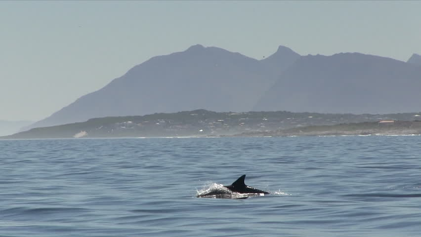 Bottle-nose Dolphins Breaching with Mountains in Background