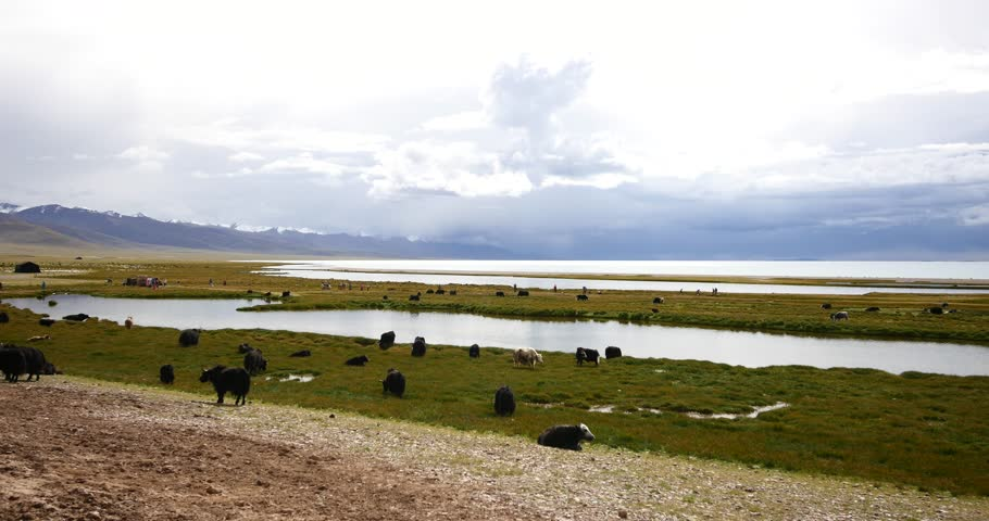 4k huge clouds mass rolling over lake namtso,tibet mansarovar,herdsman tent,a group of cow,Tibet's second largest lake,is the third largest saltwater lake in China.gh2_09256_4k
