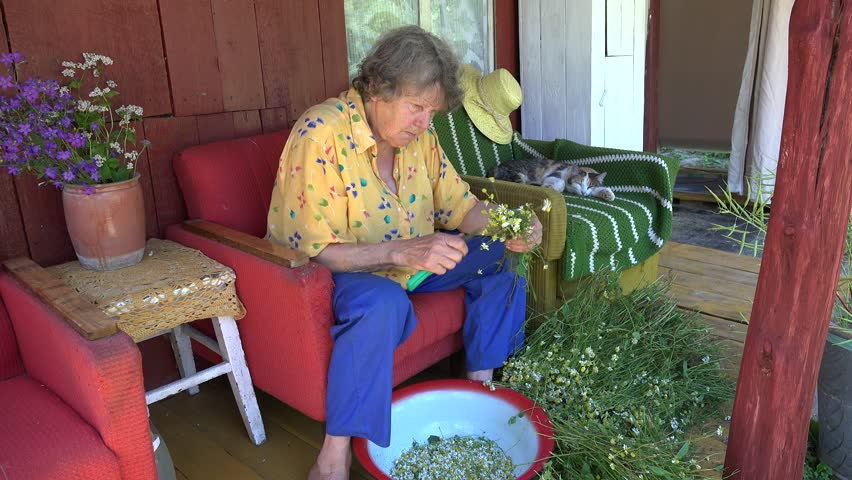 Old herbalist grandmother woman pick camomile flower blooms for herbal medicine and tabby cat sleep on outdoor armchair. Static shot. 4K | Shutterstock HD Video #15891127