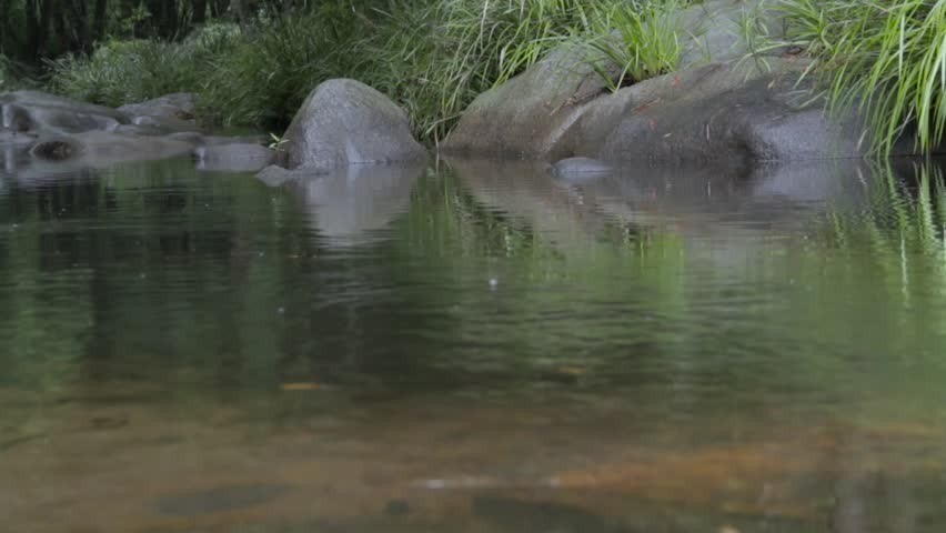 Calm Creek static shot - HD stock footage clip