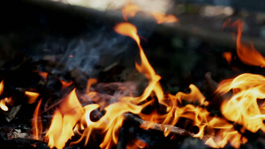 Fire burning wood chips stock footage video